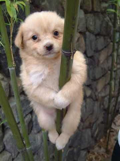 really cute puppy picture climbing bamboo tree and posing for photo