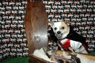 really funny vampire dogs in coffin just like dracula photo