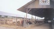 Beef Farm Jember (BF Je)