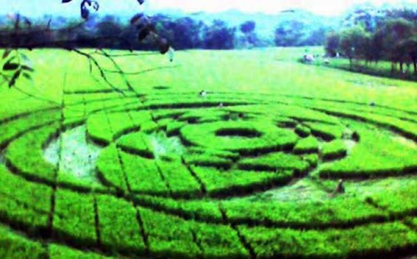 gambar Jejak Ufo di Sleman Jogjakarta, fakta dibalik jejak ufo di Sleman, foto crop circle