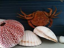Krabbe klo og kråkebolle Knut