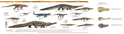 [croc_evolution.jpg]