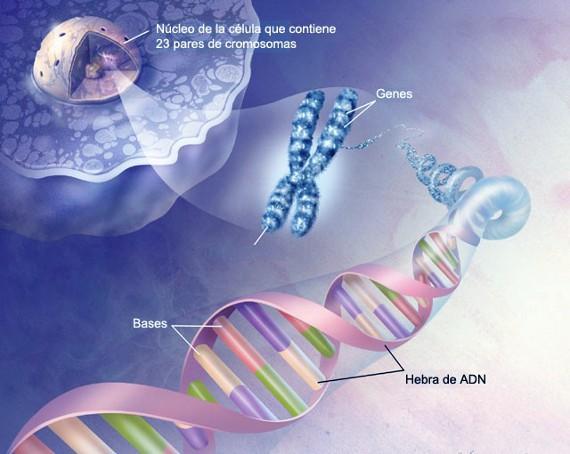 ADN Y EMOCIONES. Experimento Científico [reposición]