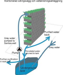 Plants Amp Garden A Gray Water Recycling System As Gardenias