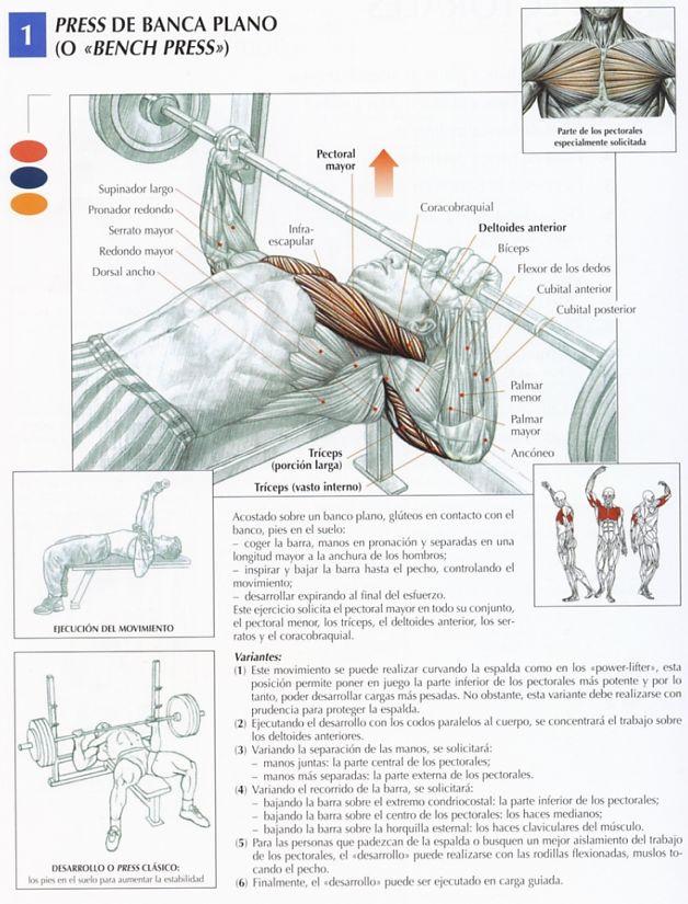 ejercicios para la espalda. ejercicios para la espalda.