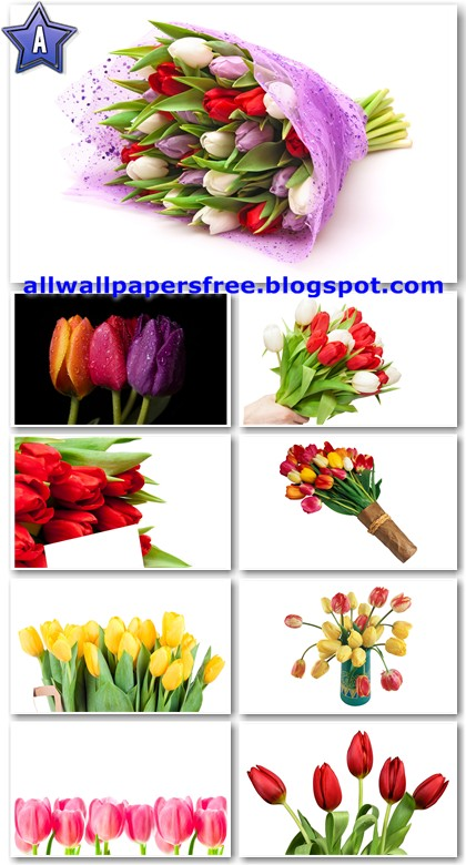 tulips wallpapers. All Wallpapers Free - The Best