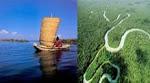 Vota por las  maravillas naturales del PERU