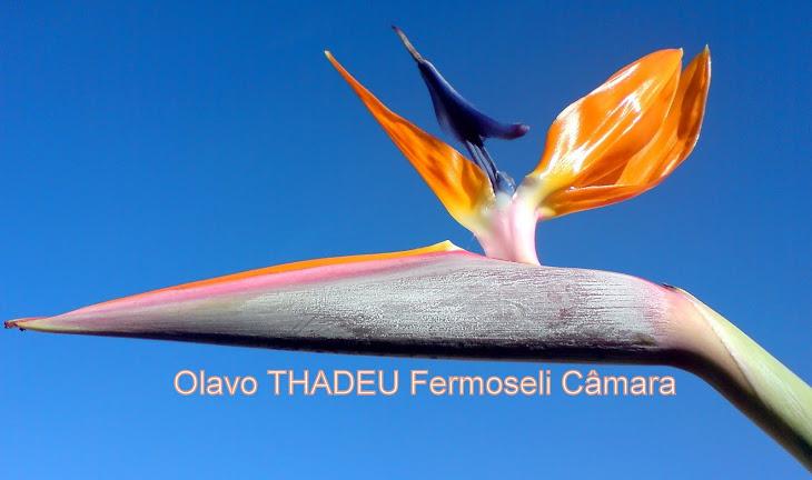 Olavo THADEU Fermoseli Câmara
