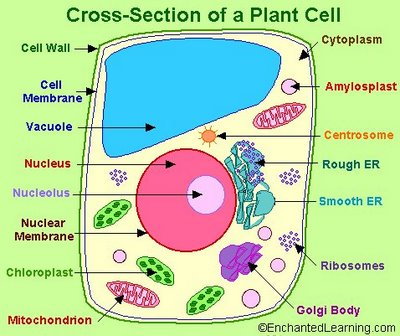 parts diagram animal cell