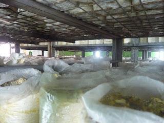 shelves of peats log use to grow mushroom
