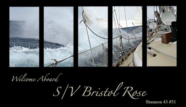 Bristol Rose