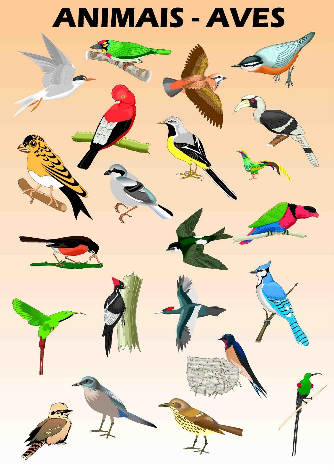 imagens para colorir de bandos aves marinhas