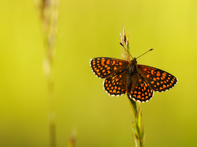 Butterfly Wallpapers 0102