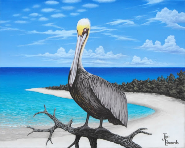 Pelican with mangroves 16 x 20