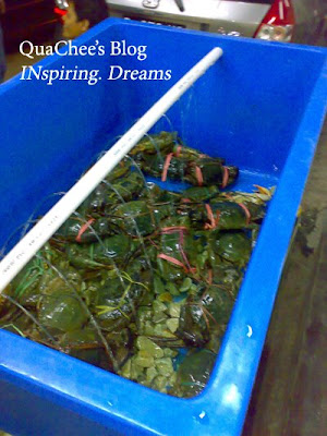 kepiting asap, live crab