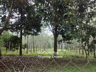 kampung, rubber estate