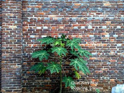 port dickson trip, tree