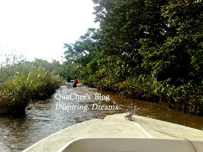 proboscis monkey tour sabah river cruise