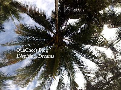 manukan island coconut tree