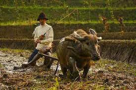TRADITIONAL INDONESIAN FARMER