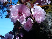 Spring flowers 2009.