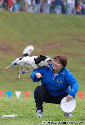 cachorro ataque frisbee mordida brinquedo dor