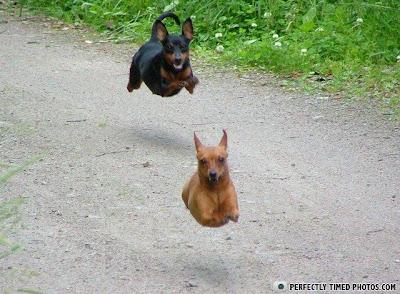 cachorros flutuando no ar