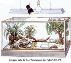 Tarta rughe febbraio 2009 for Contenitore tartarughe