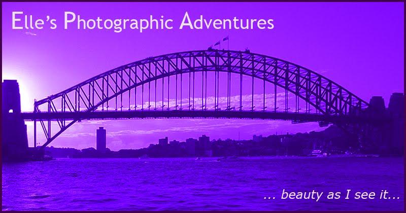 Elle's Photographic Adventures