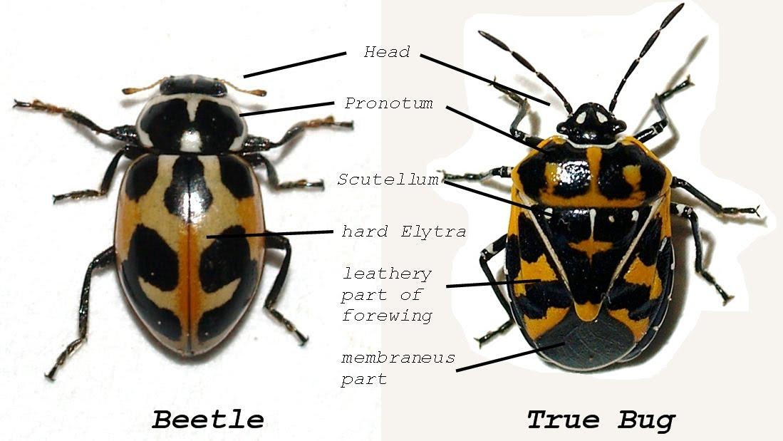 Arizona  Beetles  Bugs  Birds And More  June 2010