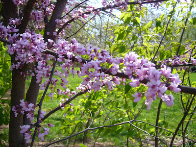 Redbud at 2 Green Acres