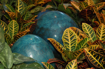 , there are blue eggs, big blue eggs, poking out between the plants