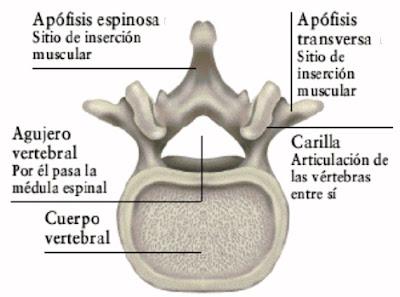 Gabriel Vargas Grau Neurocirugia Bucaramanga Colombia
