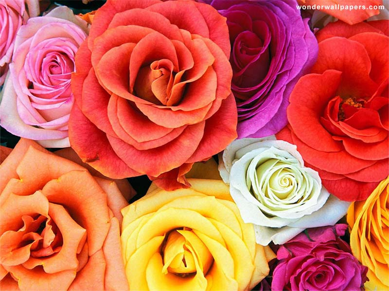 cool flowers wallpapers for smile. Beautiful Flowers