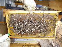 Varroa İlaçlaması-Perizin