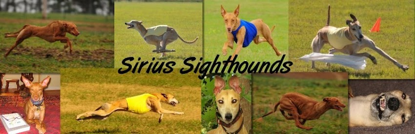 Sirius Sighthounds