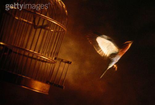 Chol na aj kichu kuchro kothar velay chepe veshe jai   Bird Freedom From Cage