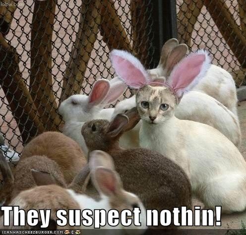funny-pictures-cat-disguised-rabbit.jpg