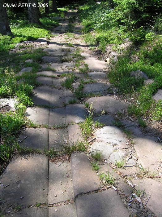 RAON-LES-LEAU (54) - Voie romaine de la forêt de Roule-Bacon