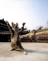 Guru Kungfu