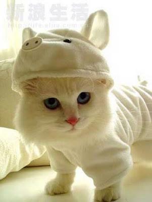 Gambar - Gambar Binatang Terbagus di Dunia Internet !