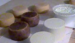 Alcune forme della mia produzione: pecorino fresco, pecorino stagionato, vaccino fresco, ricotta