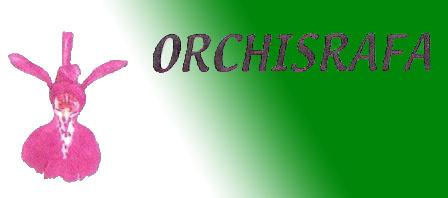 orchisrafa