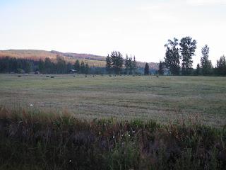 field+2 Bringing in the Hay
