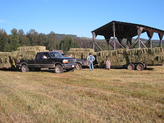 two+truck+loads Bringing in the Hay