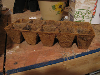 seed starting, containers for starting seeds