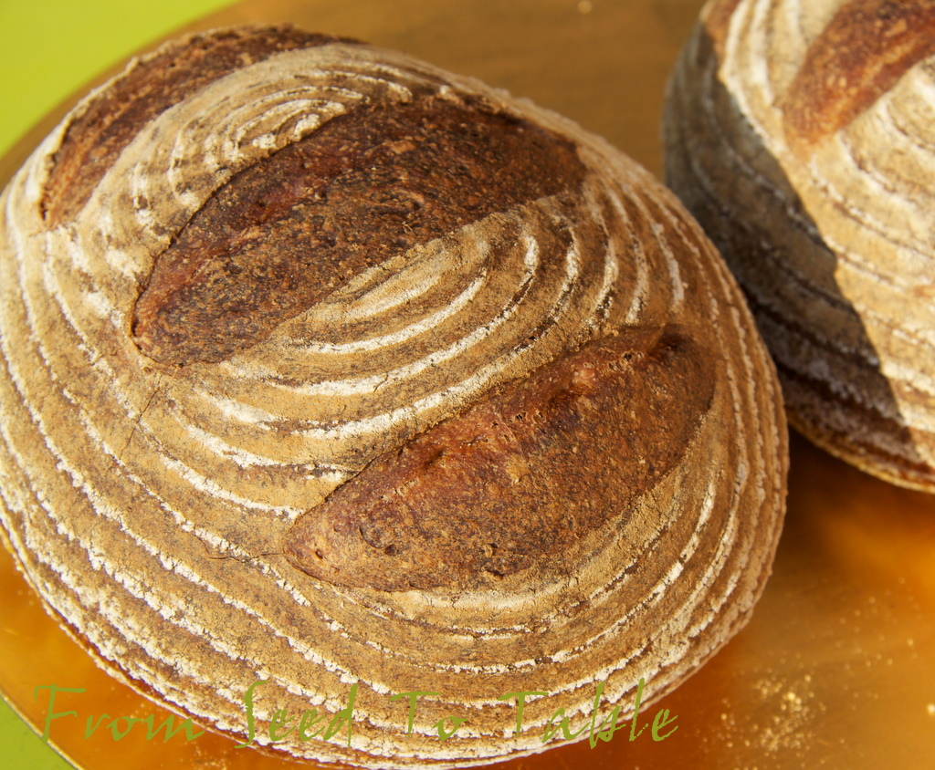 how to make bread crumbs crispy in oven