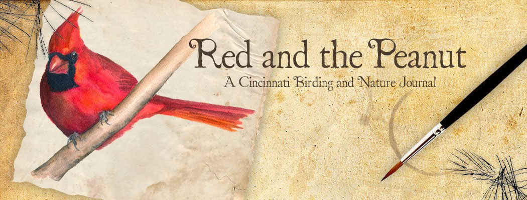 Red and the Peanut