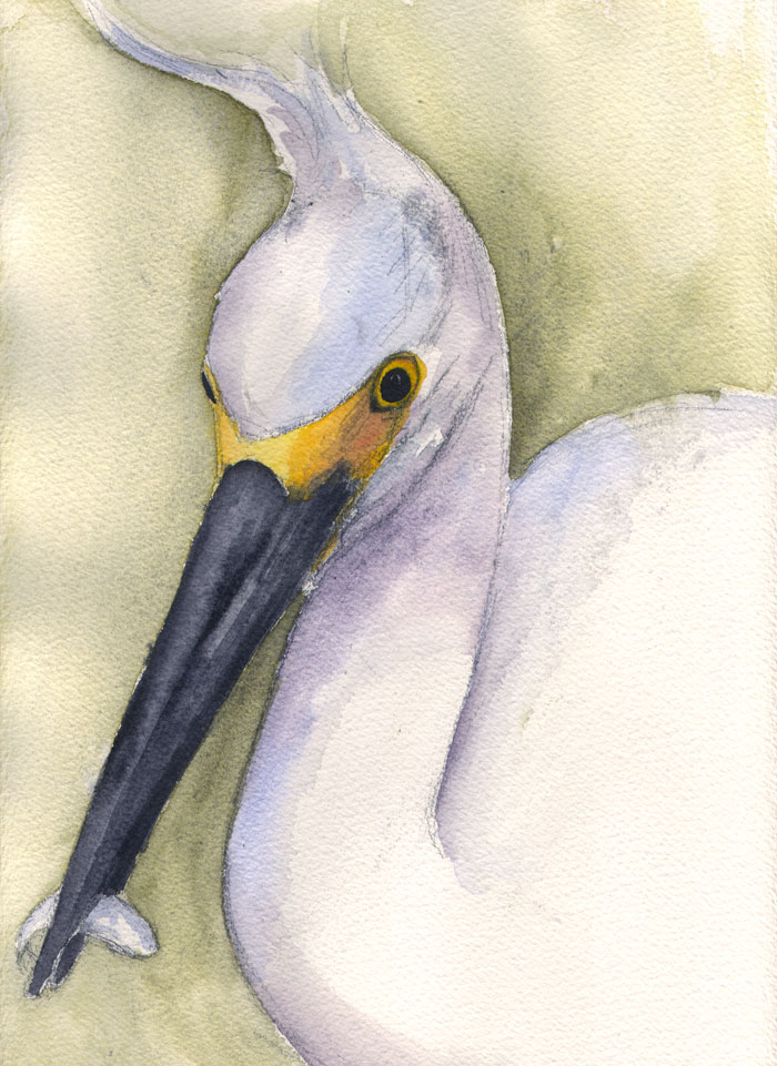 Painting 71 Snowy Egret With Plumes Flying
