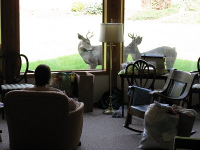 Deer at the window